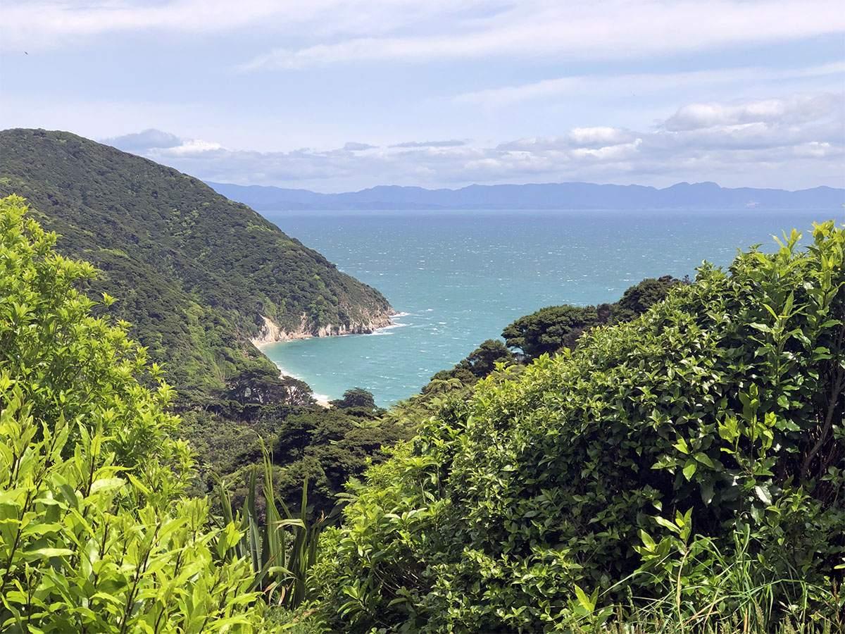 Overlooking Whariwharangi Bay