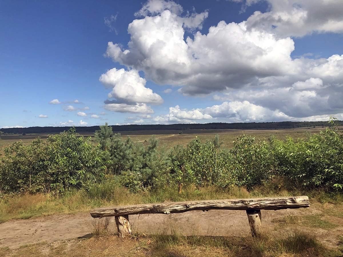 Asselsche Heide uitzicht