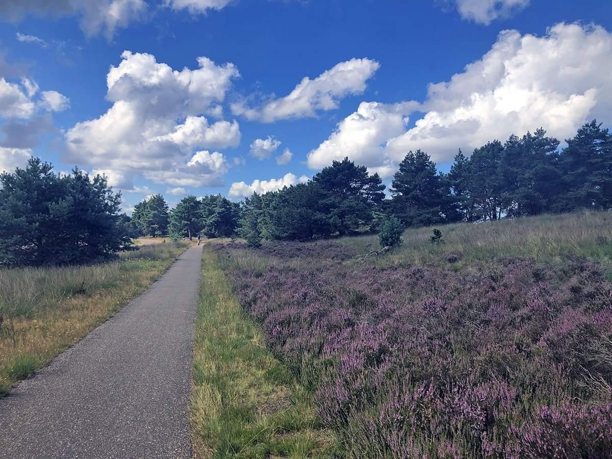 De Pomphulweg over de Asselsche Heide