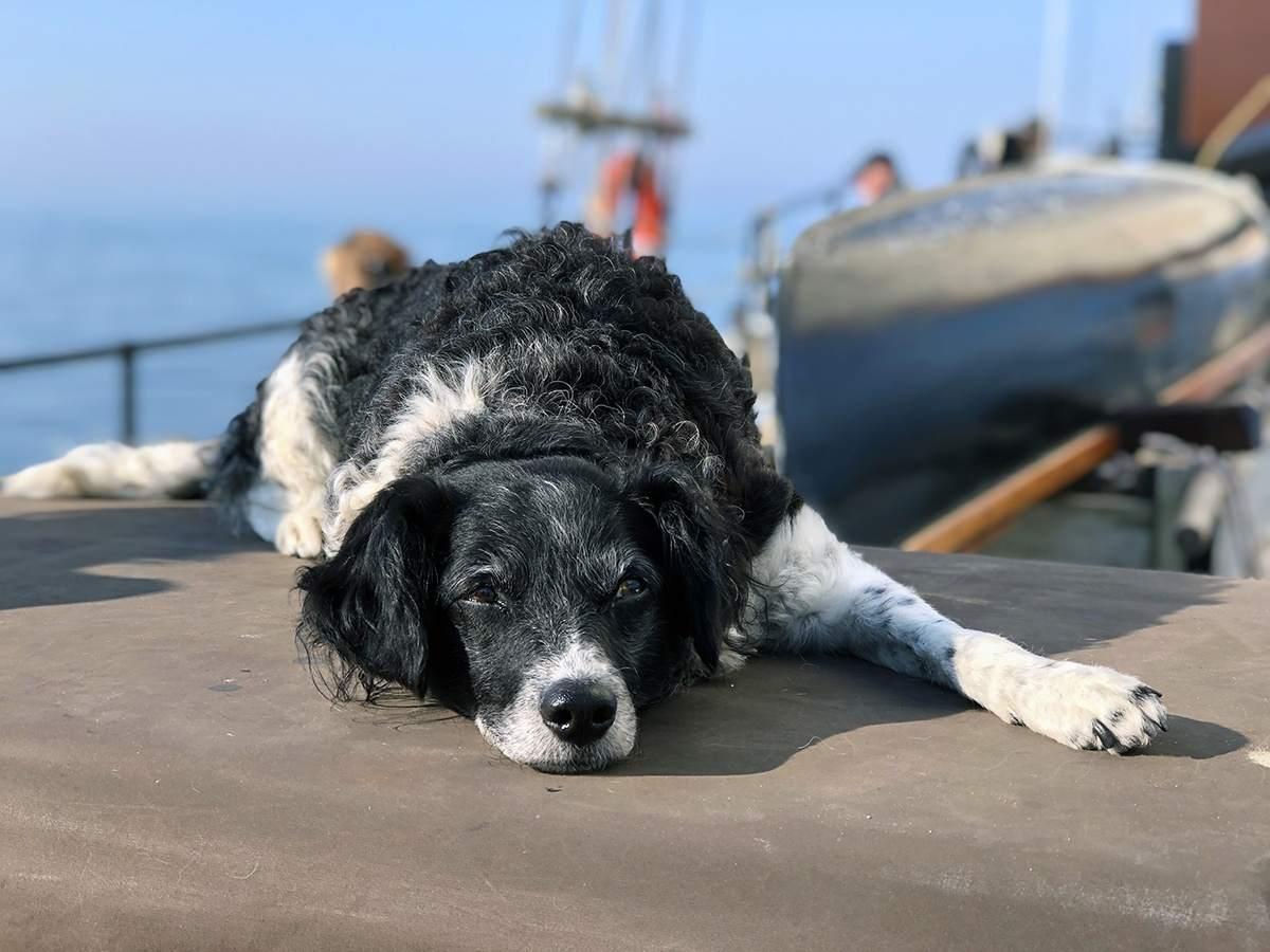 Basta aan boord van de Noordfries op de Waddenzee