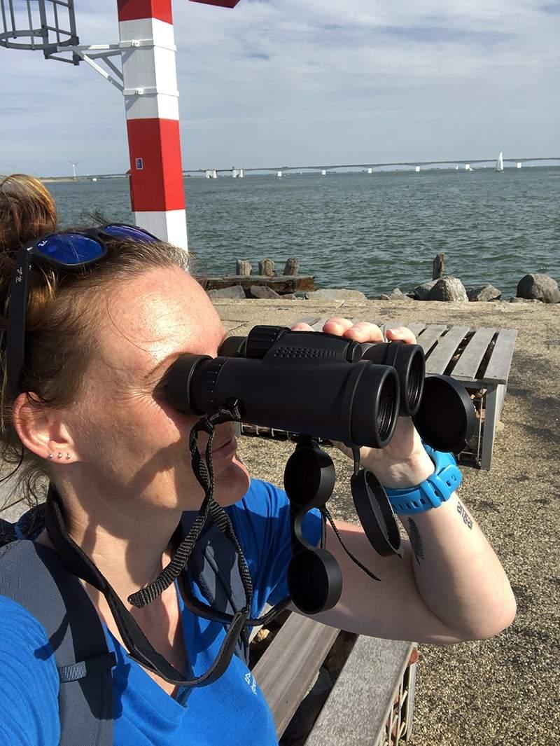 Bruinvissen in Zeeland proberen te spotten
