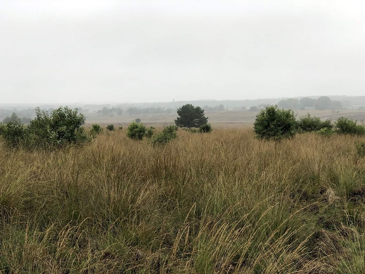 Hoog Buurlosche Heide op het Veluwe Zwerfpad etappe 13