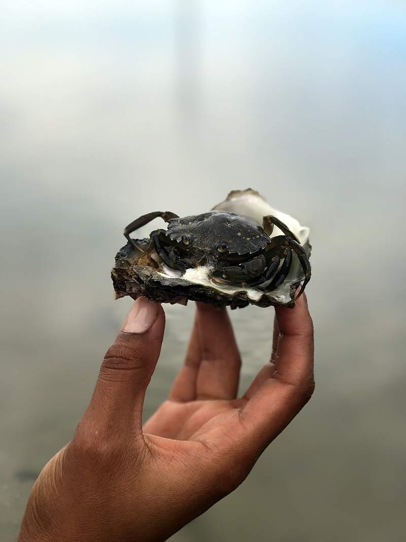 Een krab in een oester