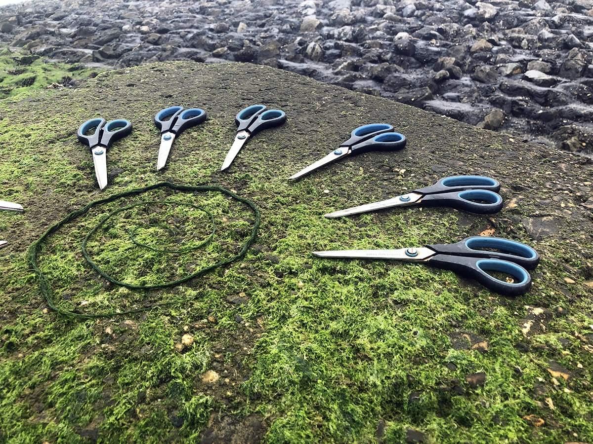 Oosterschelde National Park seaweed picking