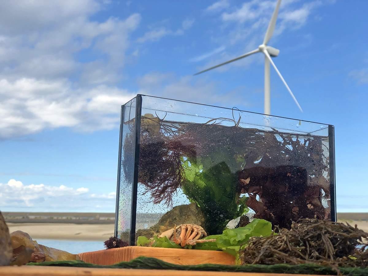 Een display met zeewier