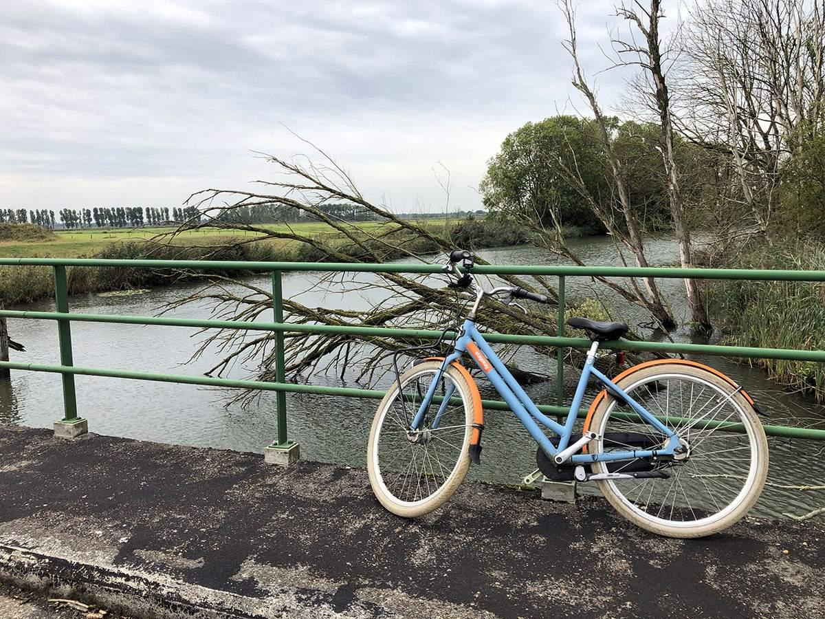 Biking in the Biesbosch