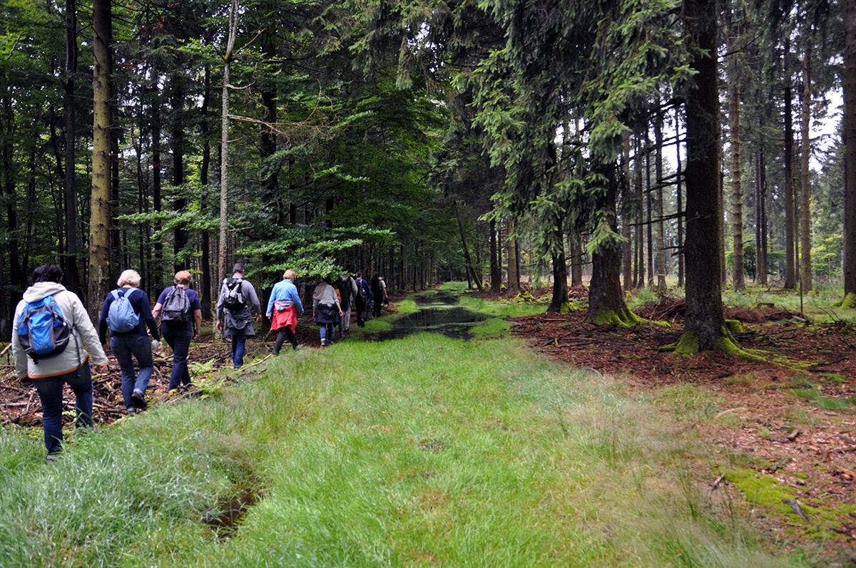 A guided walk in the national park