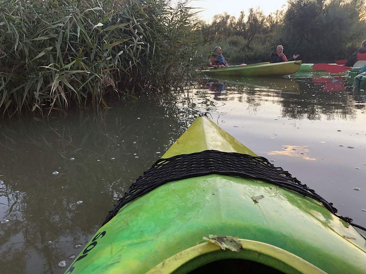 Kayaking in the Biesbosch