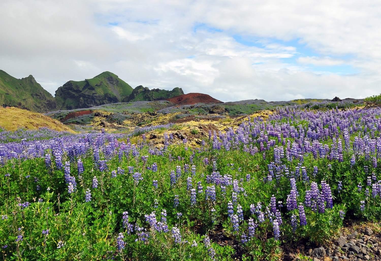 Colorful Vestmannaeyjar