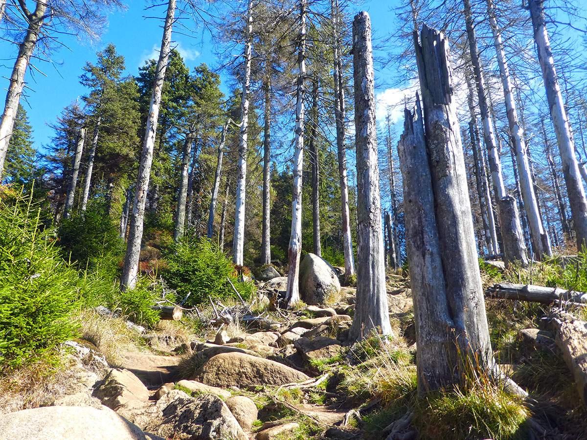 mooiste plekken in duitsland voor natuurliefhebbers - brockenstieg
