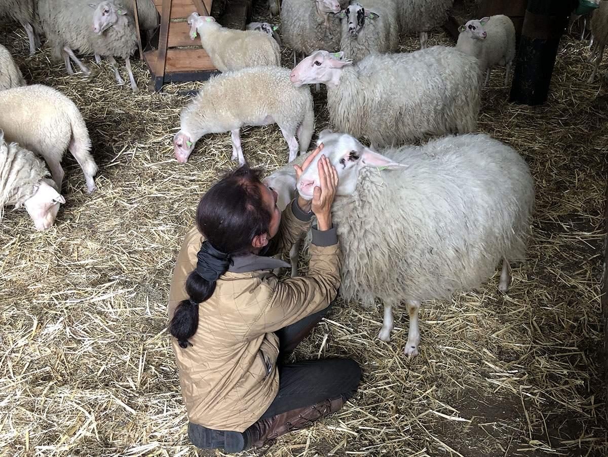 Anita en haar schapen