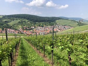 Hiking in the Remstal: through vineyards and silent forests