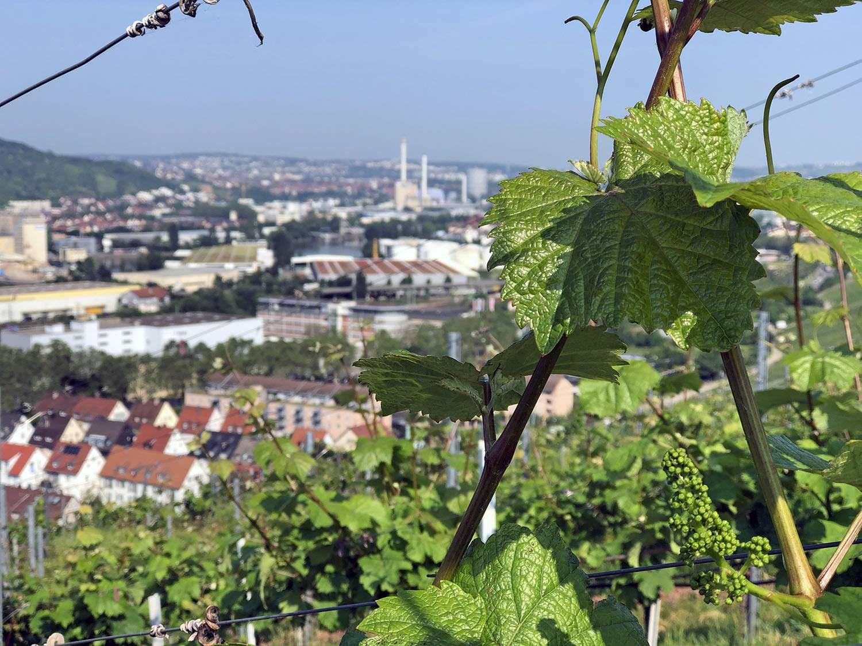 Weinwanderweg Stuttgart view