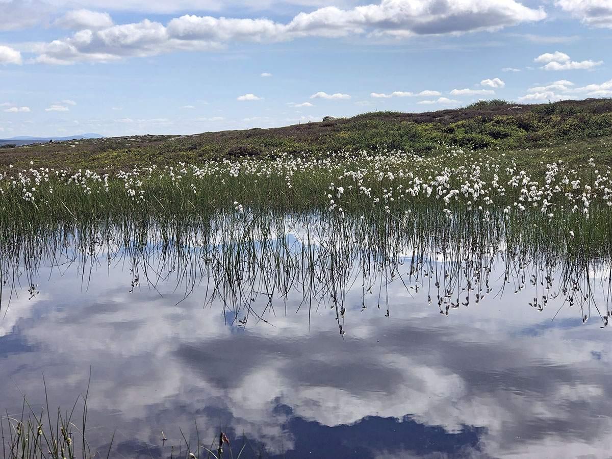 wandelen in zweden de bergmeertjes van Grövelsjön