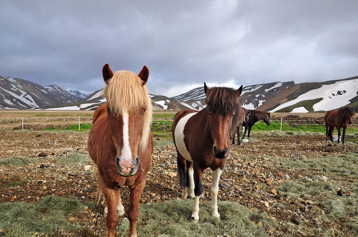 Paardrijden in Landmannalaugar